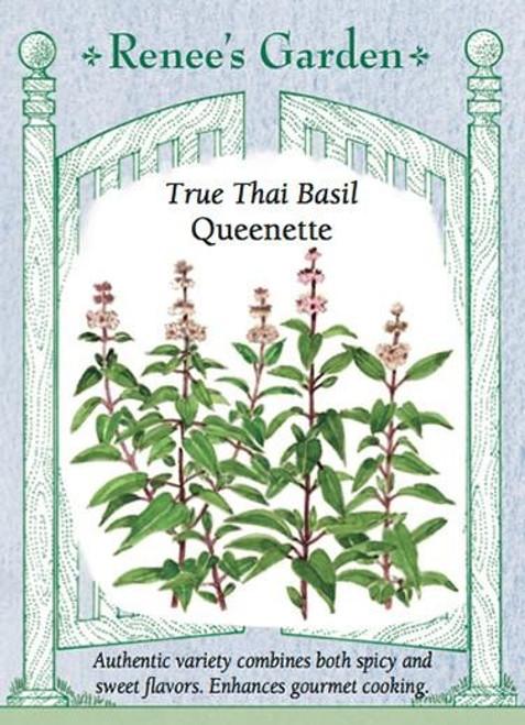 Renee's Garden ' Queenette' True Thai Basil Seed