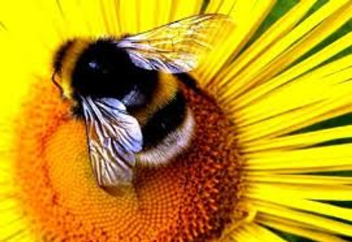 Attracting Pollinators and Beneficial Insects Class