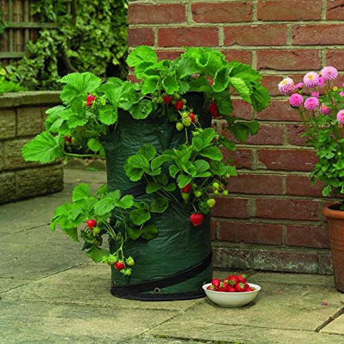 Gardman Strawberry and Herb Pop-Up Planter, Green