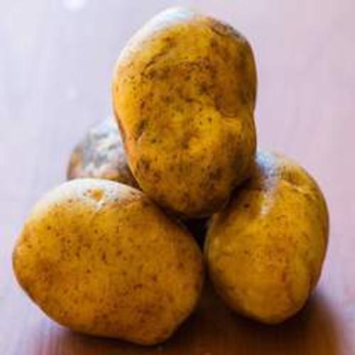 Kennebec Seed Potato, 5lb