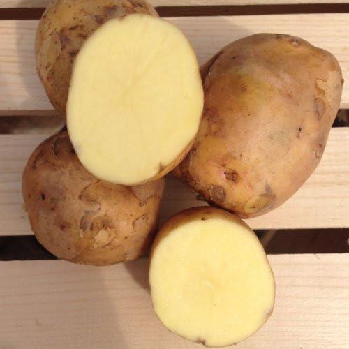 Yukon Gold Seed Potato, 5lb