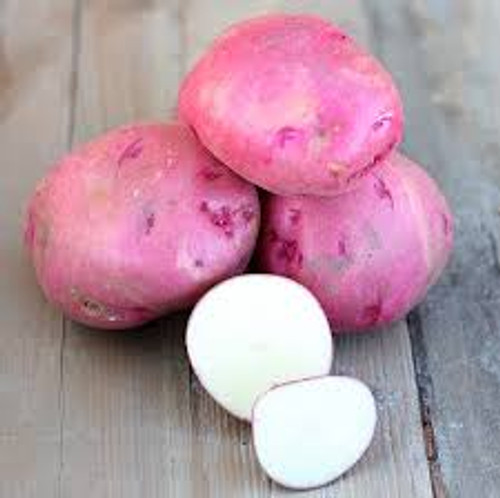 All Red Seed Potato, 5lb
