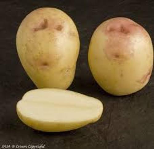 King Edward Seed Potato, 5lb