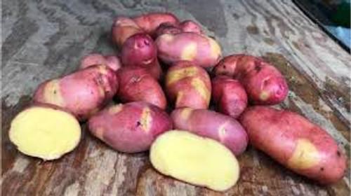 Magic Myrna Seed Potato, 5lb