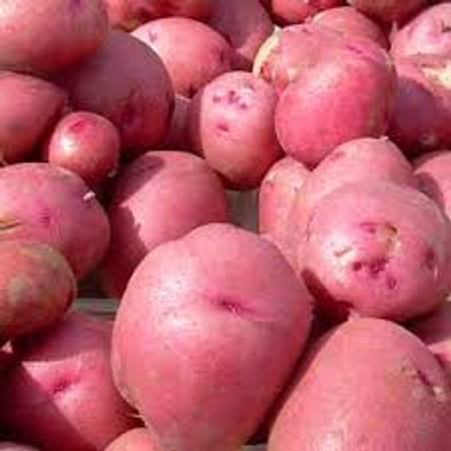Red Pontiac Seed Potato, 5lb