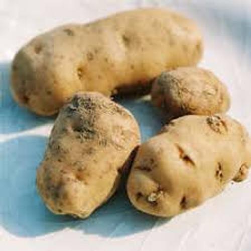 Haida Seed Potato, 5lb