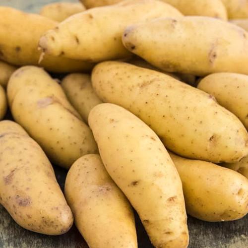 Yellow Fin Seed Potato, 5lb