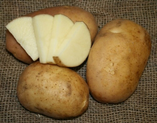 Cal White Seed Potato, 5lb