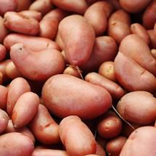Delta Red Fingerling Seed Potato, 5lb