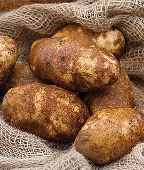 Norkotah Russet Seed Potato, 5lb