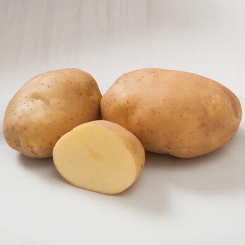 Satina Seed Potato, 5lb