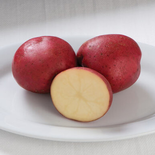 Dark Red Norland Seed Potato, 5lb