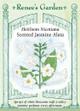 Renee's Garden 'Jasmine Alata' Heirloom Nicotiana Seed