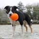Planet Dog Orbee Tuff Sol Sun Ball