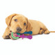 Nylabone Puppy Teething Pacifier, XS