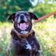 "Circle T Oak Tanned Leather Dog Leash 3/4"", 6ft, Black"