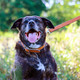 "Circle T Oak Tanned Leather Dog Leash 1"", 6ft, Black"