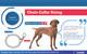 Titan Dog Prong Training Collar