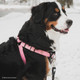 Walk Right! Front-Connect No-Pull Padded Dog Harness