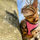 Comfort Soft Adjustable Cat Harness with 6' Leash, XS