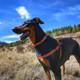"K9 Explorer Reflective Adjustable Padded Dog Harness, 1"" X 26""-38"""