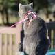 Comfort Soft Adjustable Cat Harness, XSM
