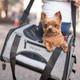 Bergan Booster Pet Carrier