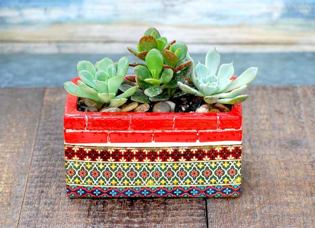 red multi Barcelona potted succulent