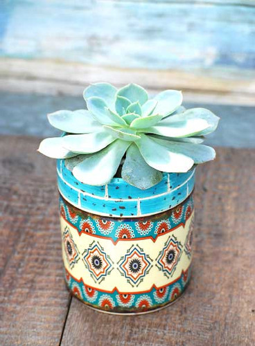 teal multi Barcelona potted succulent