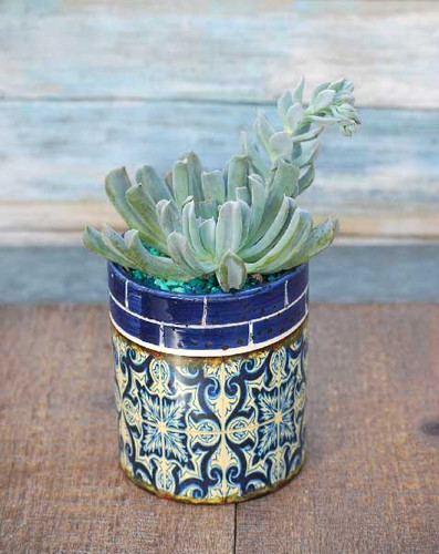 Blue and Yellow multi Barcelona potted succulent