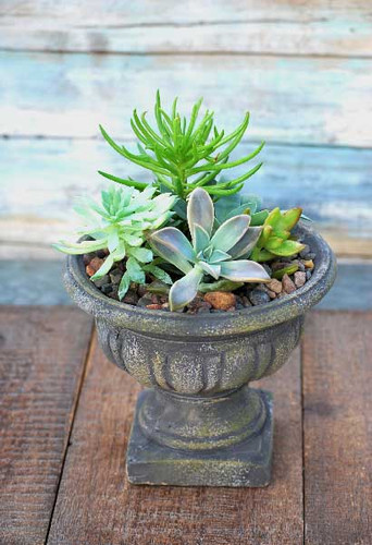 succulents planted in small urn pedestal