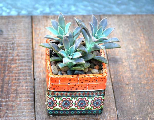 Barcelona orange mini square potted succulents