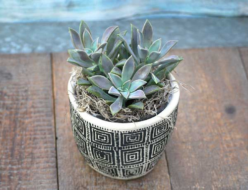 Retro black square designed ceramic potted succulent garden top view