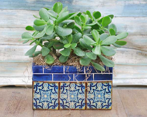 beautiful Barcelona themed pottery with jade plant potted in it