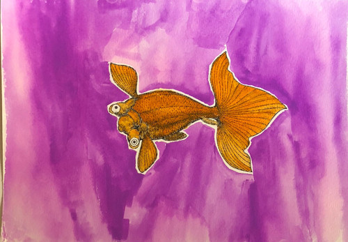 Goldfish Orchid Pink Background