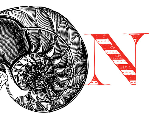 Alphabet Print N Nautilus