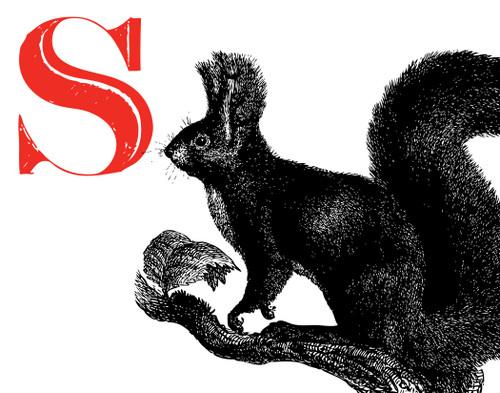 Alphabet Print S Squirrel