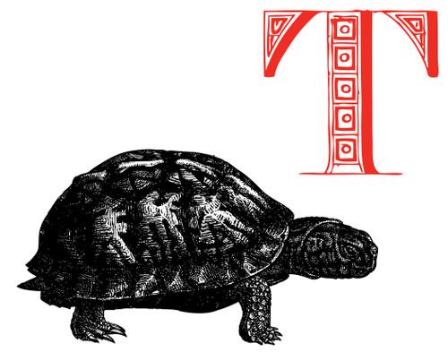 Alphabet Print T Tortoise