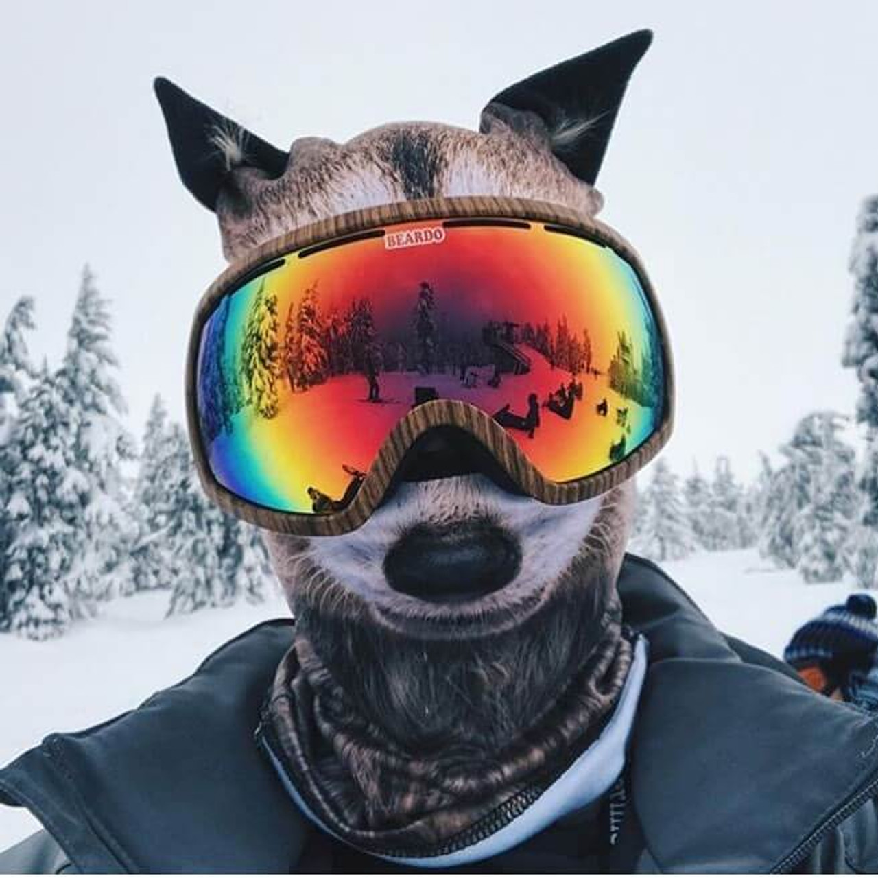 BEARDO RAUCOUS RACCOON WINTER SNOW MASK