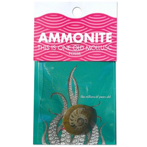 LIKE MILLIONS OF YEARS OLD AMMONITE  MOLLUSC FOSSIL