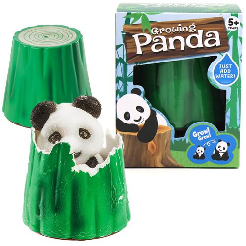 Growing Panda Hatch and Grow Panda