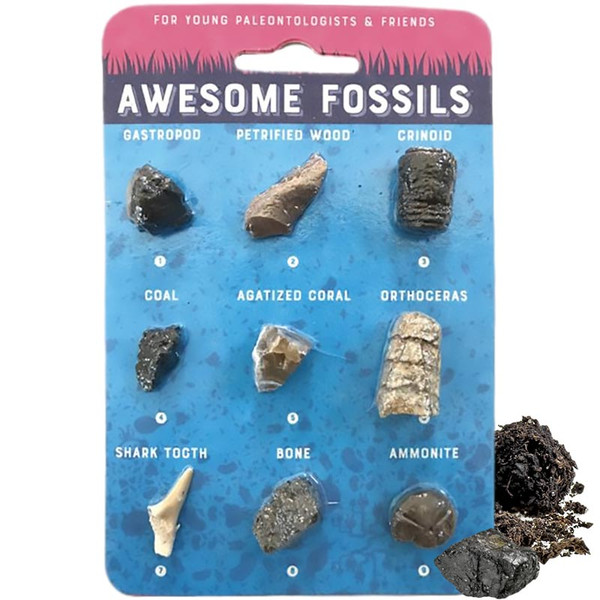 Awesome Fossil Collection