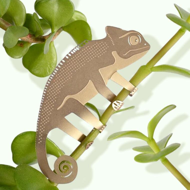Chameleon Plant Decoration