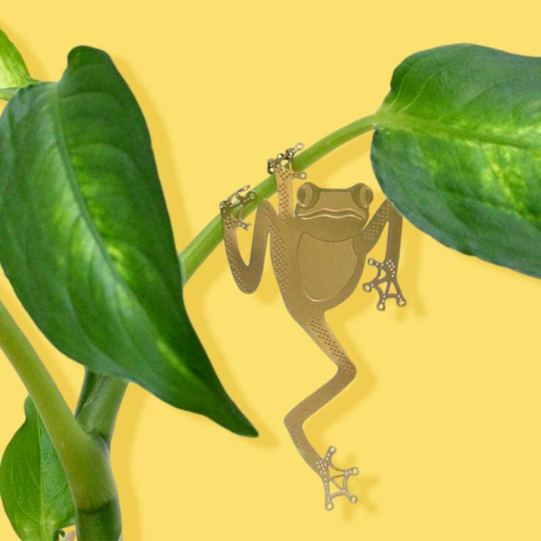 Plant Animal Tree Frog
