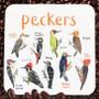 Peckers Dirty Language Bird Coaster