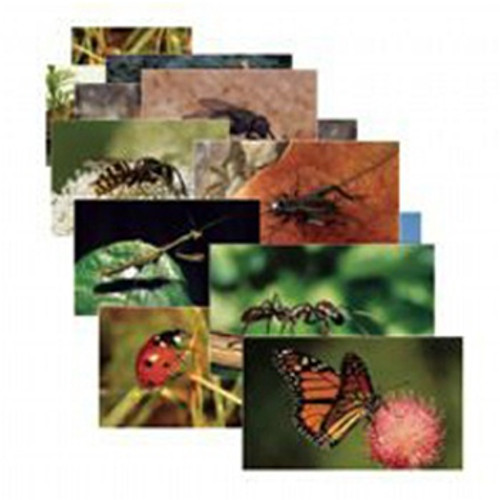 Insects 14 Poster Cards