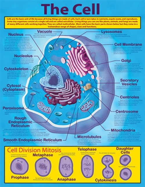 The Cell Chartlet