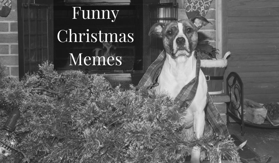 7 Funny Christmas Memes to make you laugh