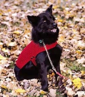 ePattern Knit Dog Coat