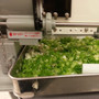 Negimaru 120 Manual Scallion Slicer